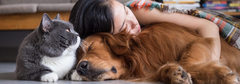 acheter collier antiaboiement electrique chien