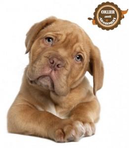 journée-mondiale-du-chien-2016