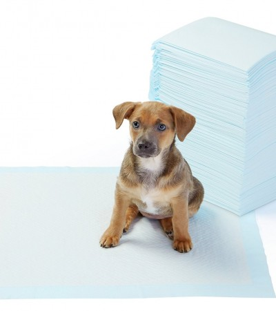 Tapis d'apprentissage et de propreté pour chien