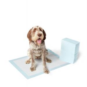 """Résultat de recherche d'images pour """"chien proprete"""""""