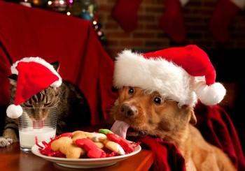 box-cadeau-chien-chat-noel
