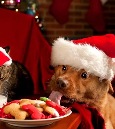 La Wamiz Box :Une idée de cadeau pour le Noël de votre chien