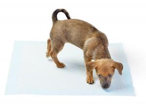 tapis-apprentissage-chien