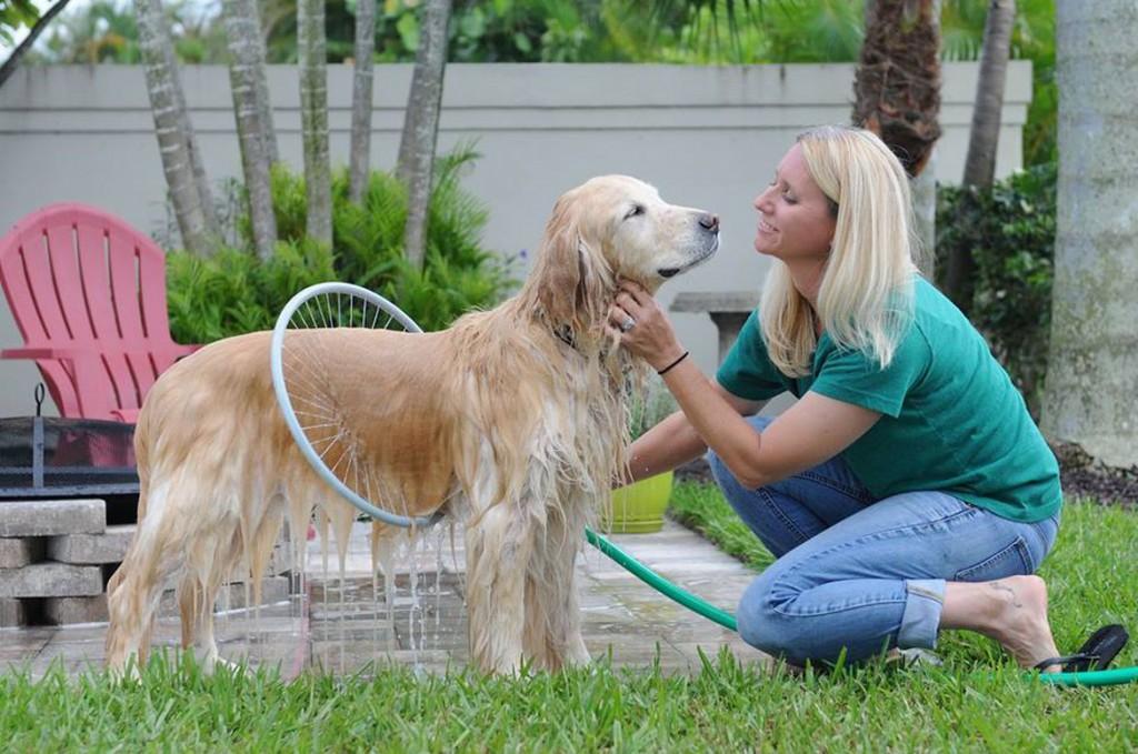 woof washer un moyen de bien laver son chien