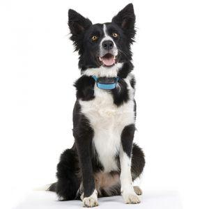 canicom-eyenimal-accessoires-chien