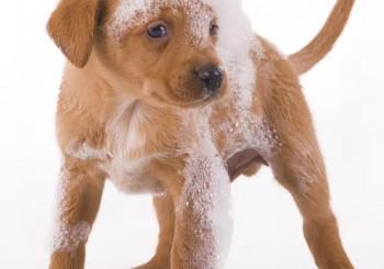 laver son chien dans une baignoire