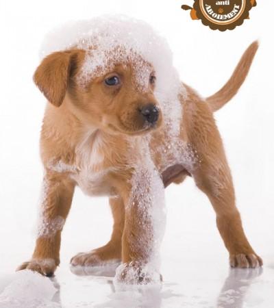 Comment laver son chien ?