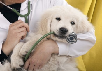 mutuelle-chien-soins