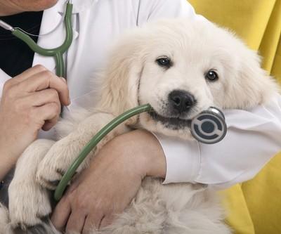 Les mutuelles canines pour la santé de votre chien