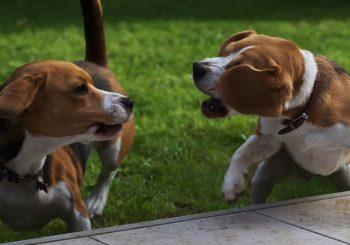 Avis vétérinaire collier chien