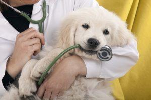 avis du veterinaire sur les colliers
