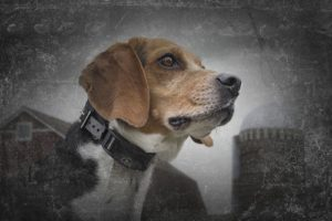 Port Collier chien Sport Dog