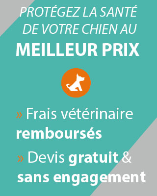 Comparer offres mutuelles chiens